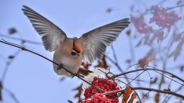 Dieu dit : Que les eaux produisent en abondance des animaux vivants, et que des oiseaux volent sur la terre vers l'étendue du ciel (Genèse 1:20-22)