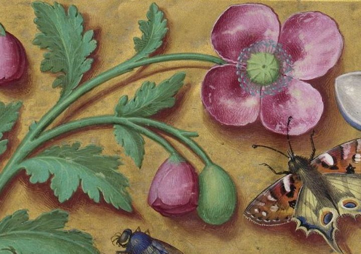 Les grandes heures d'Anne de Bretagne : un chef d'œuvre Breton