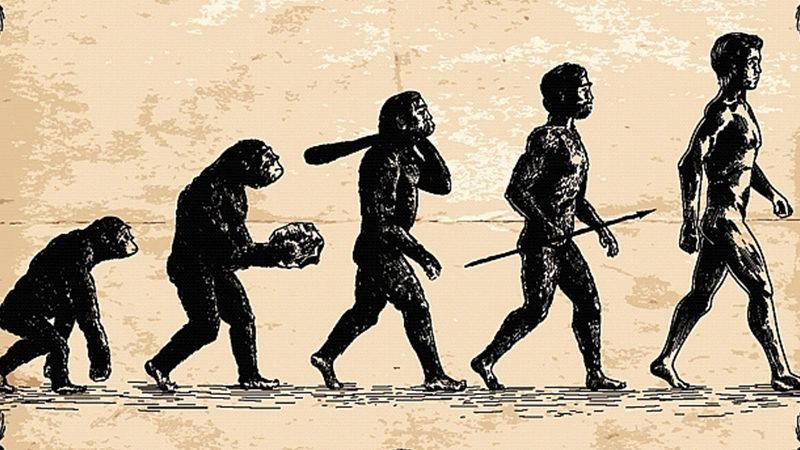 La théorie de l'évolution de la question du code génétique
